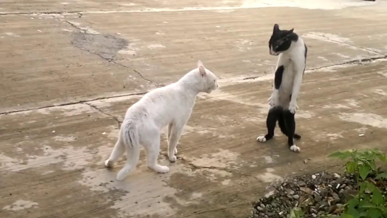 Bruce Lee's Lost Cat