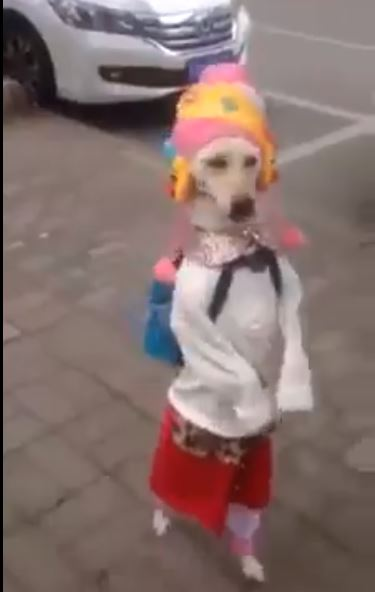 Funny DOG Walk in Dubai